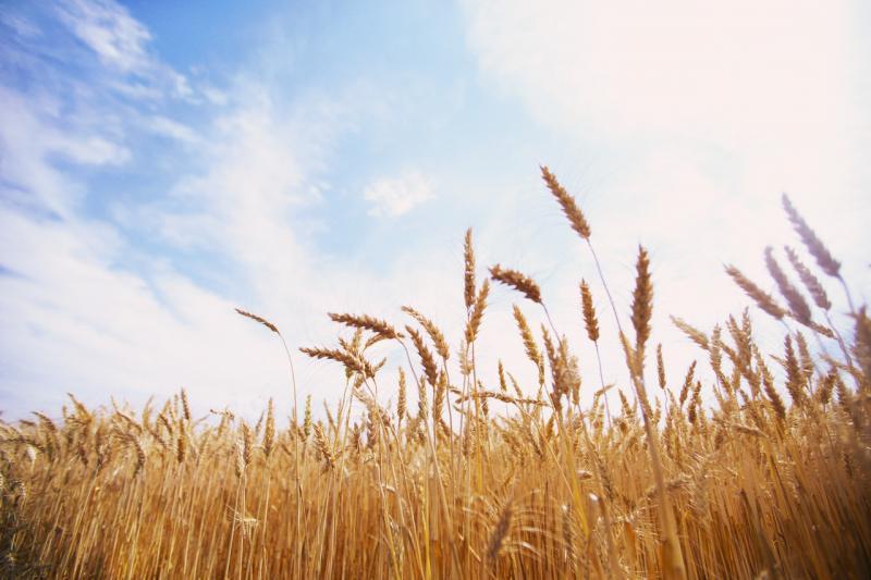 Dédommager vos cultures par l'assurance agricole