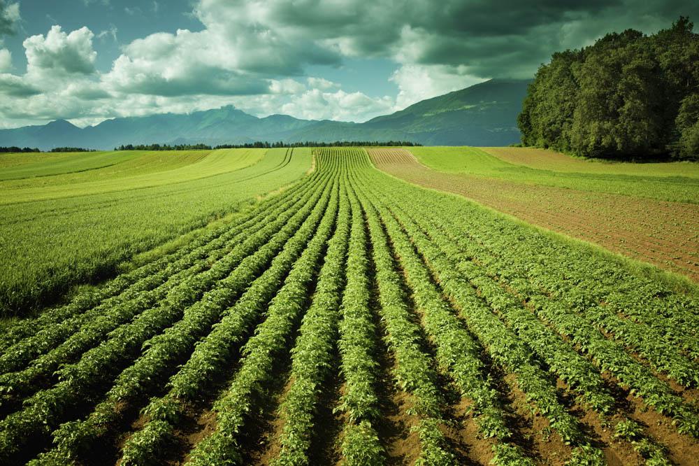 L'assurance pour les professionnels de l'agriculture