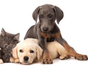 Pourquoi souscrire à une mutuelle d'assurance pour animaux?