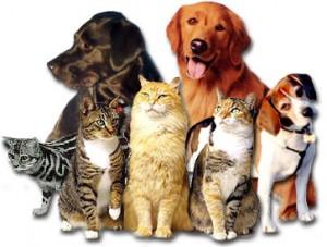 Prise en charge de la dysplasie chez les animaux