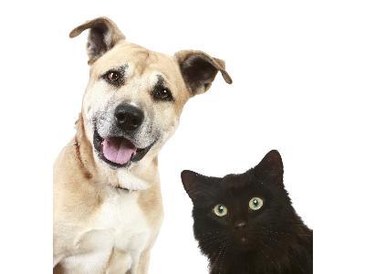 Assurance responsabilité civile pour animaux.
