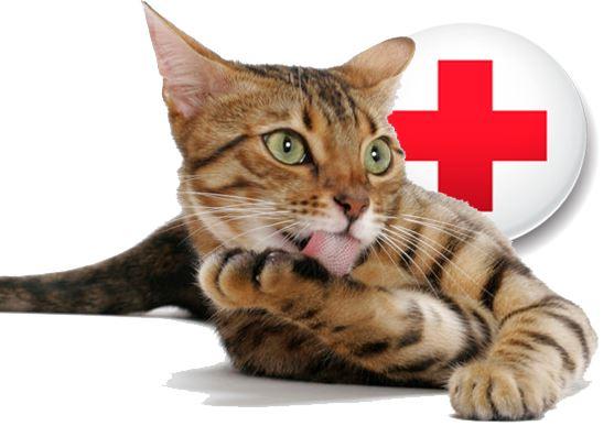 Pourquoi souscrire une assurance chat ?