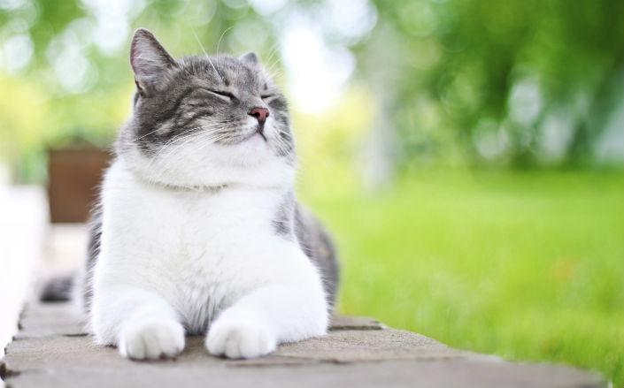 Assurance pour chat : quelles formules choisir ?