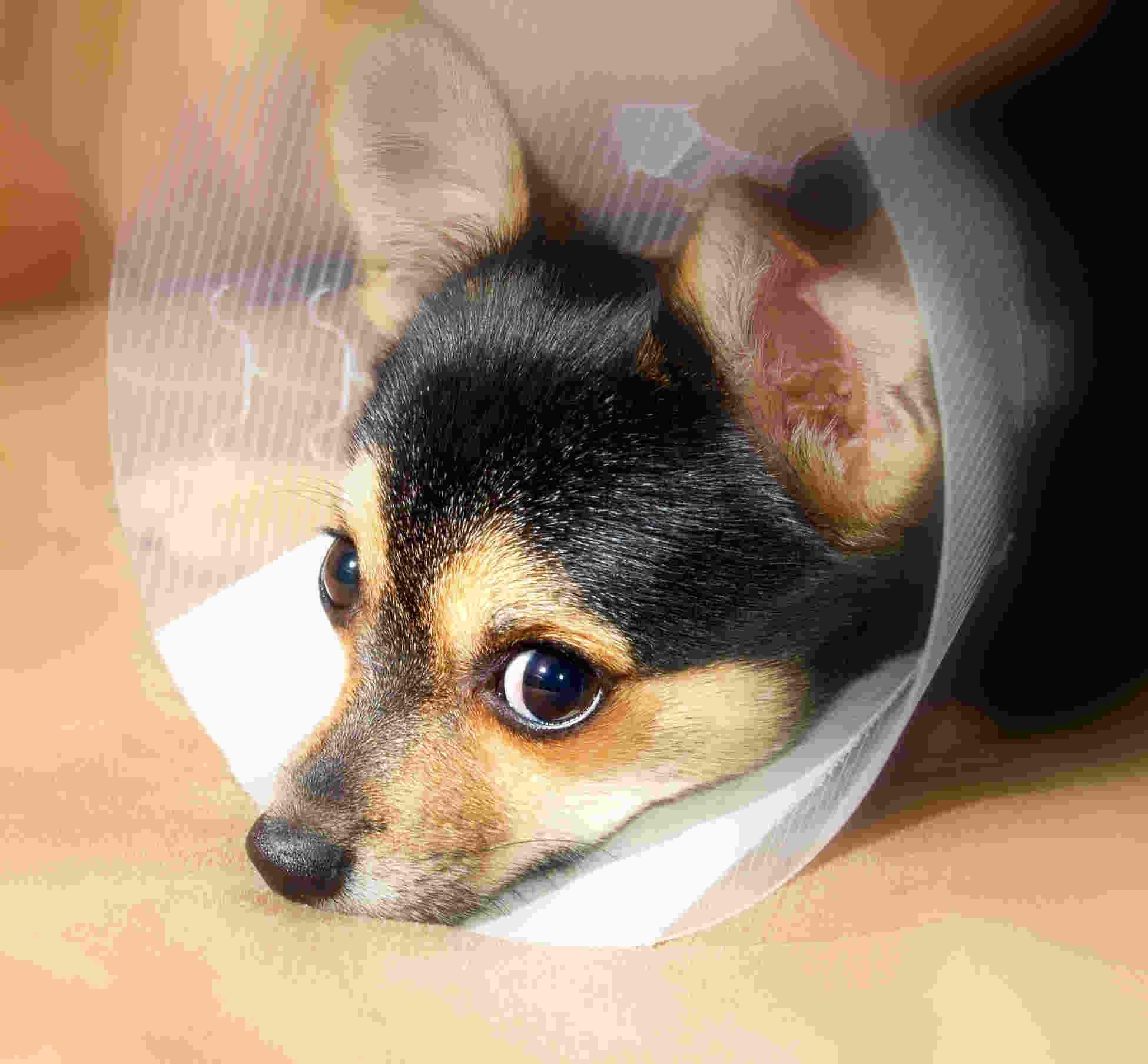 Quel est le prix d'une assurance pour chien ?