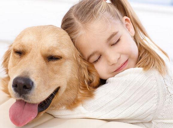 Qu'est-ce qu'une assurance pour chien ?